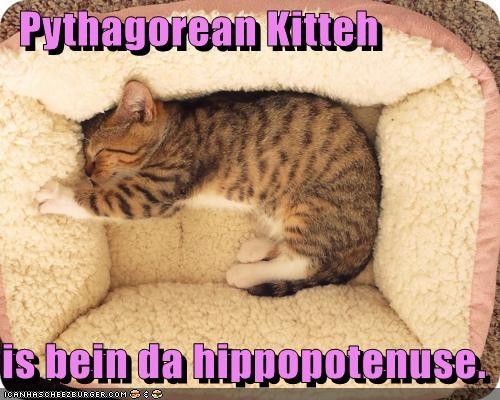 Cheezburger Image 5332303616