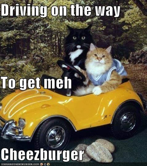 Cheezburger Image 5332880640
