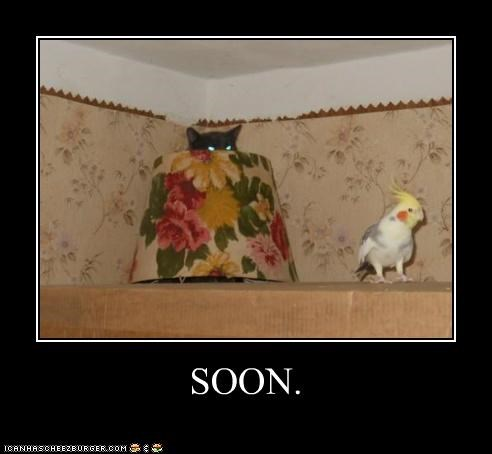 ambush,best of the week,bird,caption,captioned,cat,Hall of Fame,lamp,meme,peeking,shade,SOON,waiting