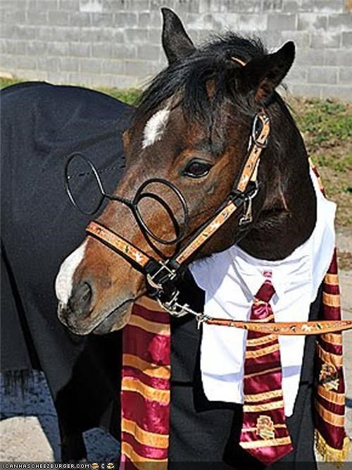 around the interwebs,costume,halloween,Harry Potter,horse,horses,the fw