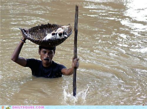 amazing ark Babies baby cat Cats courageous flooding Hall of Fame heartwarming hero kitten mk ii noah rescue touching - 5333384448