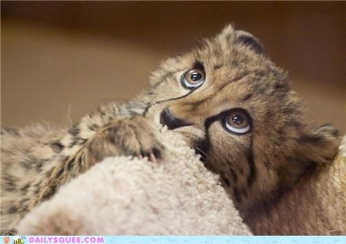 acting like animals baby bambi cheetah cowering cub disney dread dreading Hall of Fame Movie scared worried - 5333411328