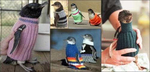 2011 Tauranga Oil Spill,Penguin Jumpers,Penguin Sweaters