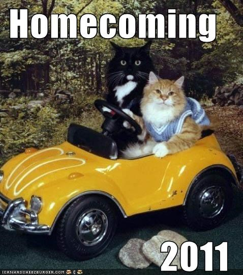 2011 caption captioned car cat Cats date homecoming Photo remembering shoop - 5333592832