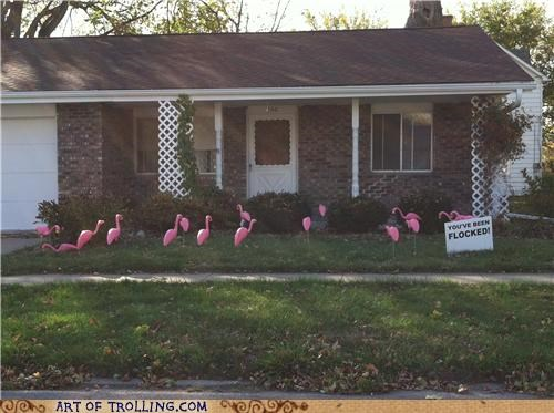 creepy flamingos flock IRL - 5333689600