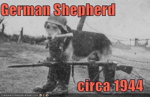 German Shepherd circa 1944