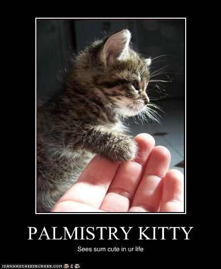 caption captioned cat cute Hall of Fame kitten life palm palmistry palms reading sees