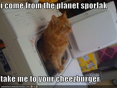 Cheezburger Image 5334055424