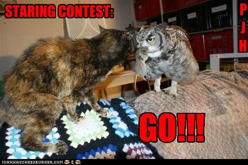 caption captioned cat contest go Owl Staring staring contest - 5334359552