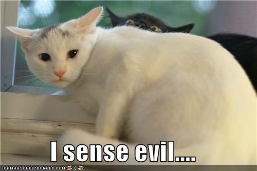 black caption captioned cat Cats evil I ominous sense Staring white - 5334645760