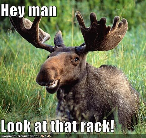 animals innuendo look at that rack moose rack - 5334686720
