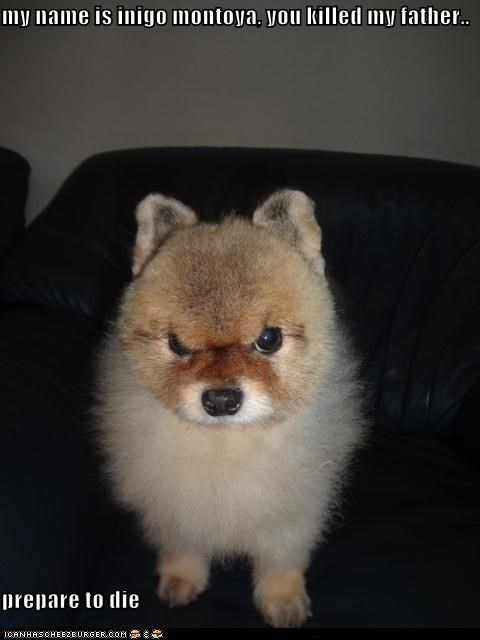 glare not happy whatbreed - 5334987008