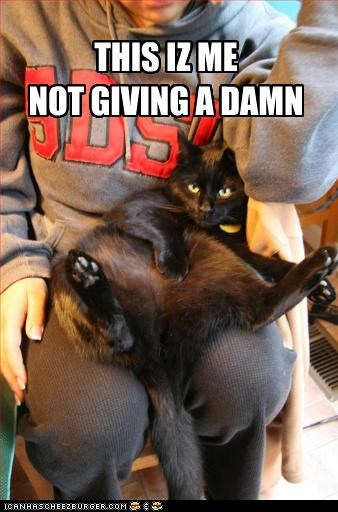 caption captioned cat damn dont-care giving me no1purr not this - 5335108096