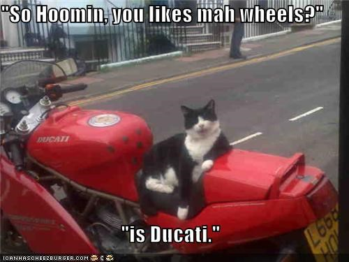 brand,caption,captioned,cat,ducati,motorcycle,pun,question,ride,showing off