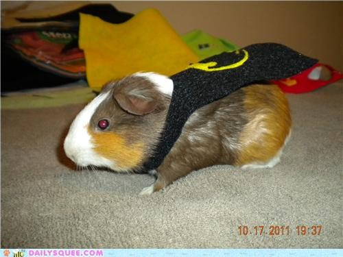 batman cape costume guinea pig Hall of Fame r-i-p reader squees remembrance