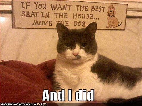 lolcats signs - 533547264
