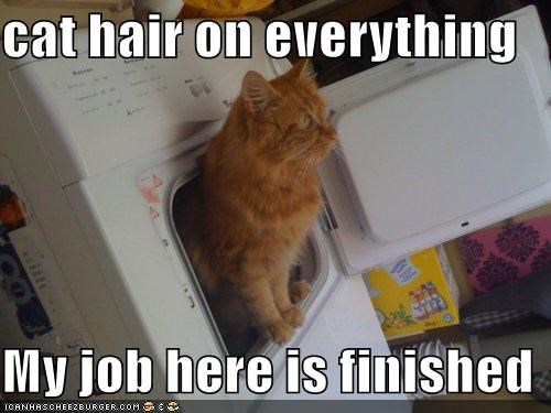caption captioned cat dryer everything finished hair Hall of Fame here job on success - 5335720192