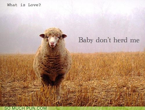 baby dont Haddaway Hall of Fame herd hurt literalism me sheep similar sounding song what is love - 5335820800