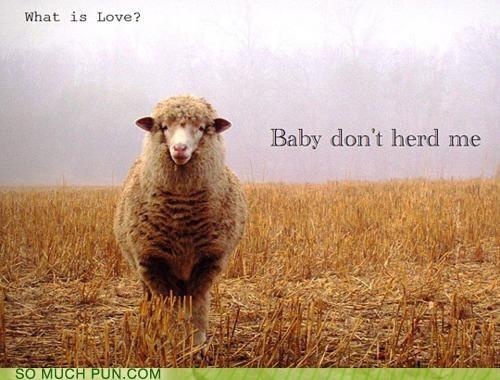 baby dont Haddaway Hall of Fame herd literalism me sheep similar sounding song - 5335820800