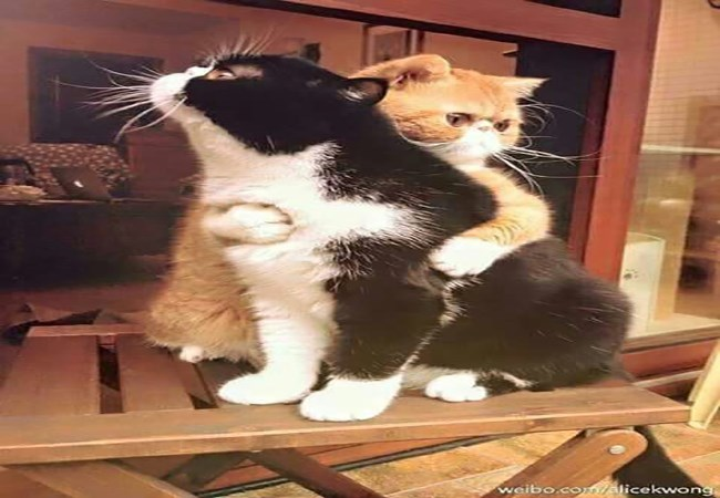 a funny list of cats hugging and seeming to enjoy it or do it from love