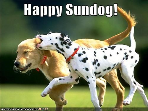 dalmatian friends friendship happy sundog labrador retriever play playing Sundog - 5336226560