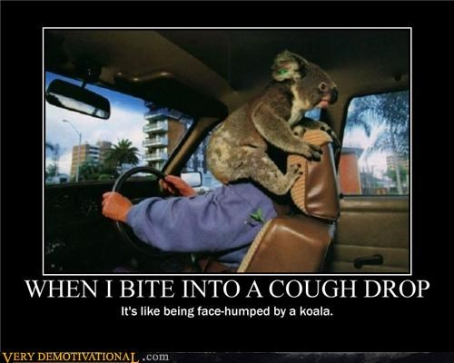 cough drop hilarious koala wtf - 5336232448