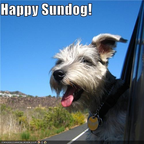 car driving happy sundog Sundog terrier whatbreed window - 5336233984
