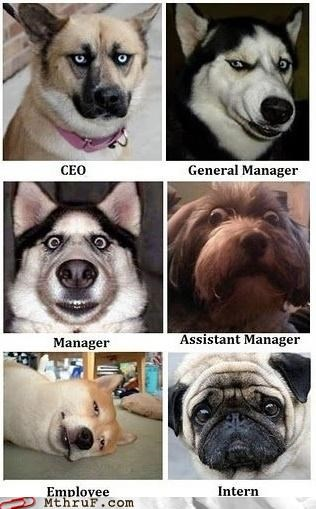boss corporation dogs employee Hall of Fame hierarchy promotion raise - 5336236288