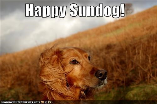 happy sundog irish setter outdoors setter Sundog wind windy