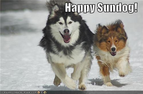 collie happy dog happy sundog husky play playing running snow Sundog - 5336263680