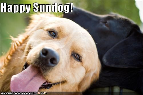 Black Lab friends friendship golden retriever happy dog happy sundog labrador retriever smile smiles smiling Sundog