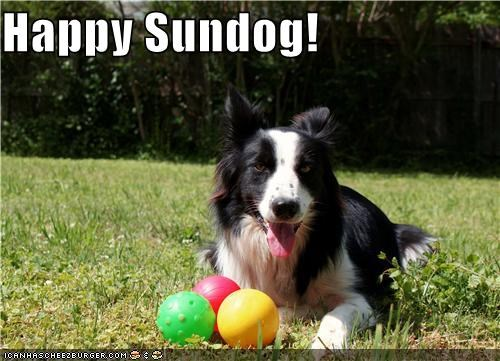 ball balls border collie grass happy sundog outdoors smile smiles smiling Sundog