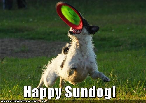 frisbee grass happy sundog play playing Sundog whatbreed - 5336278016