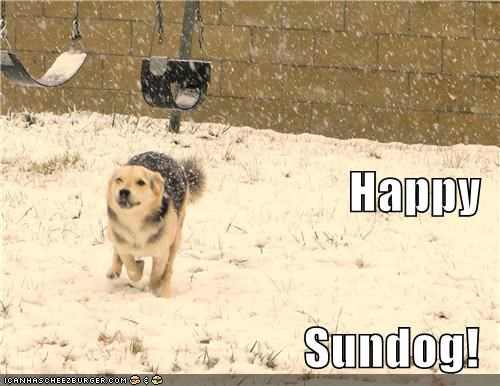 happy sundog mixed breed outdoors play playing running snow Sundog whatbreed - 5336282112