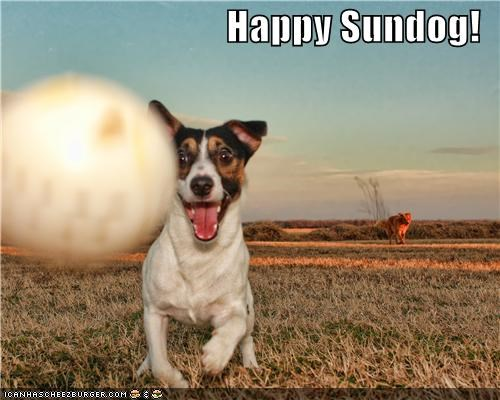 happy dog happy sundog play playing rat terrier smile smiles smiling Sundog