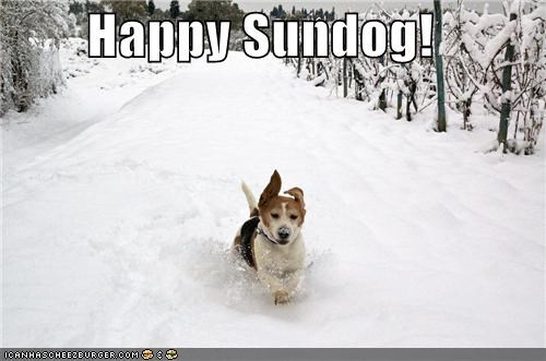 beagle happy sundog play playing running snow Sundog - 5336287232