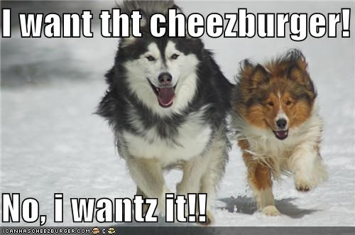Cheezburger Image 5336293376