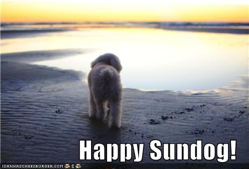 beach happy sundog maltese mixed breed poodle Sundog water - 5336296960