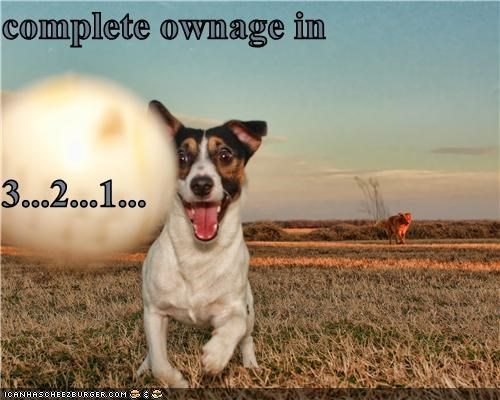 Cheezburger Image 5336452096