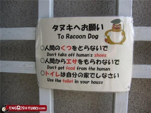 instructions Raccoon Dogs training animals
