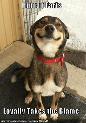 animemes blame cheese dogs fart Good Dog Greg greg - 5336549120