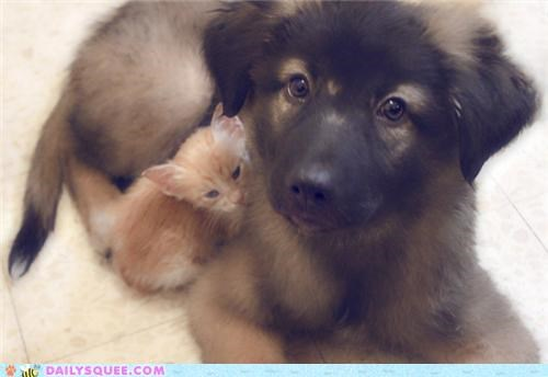 baby big brother cat Interspecies Love kitten protecting protection puppy reader squees warning - 5336612352