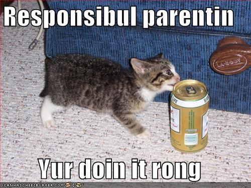 beer kitten lolcats lolkittehs parenting wrong