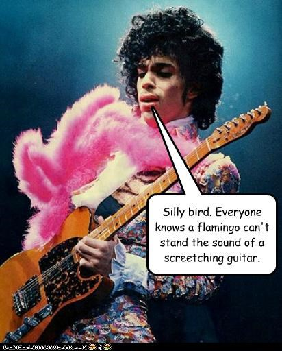 Silly bird. Everyone knows a flamingo can't stand the sound of a screetching guitar.