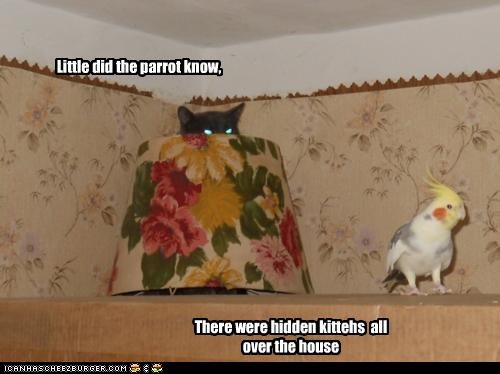 Little did the parrot know, There were hidden kittehs all over the house