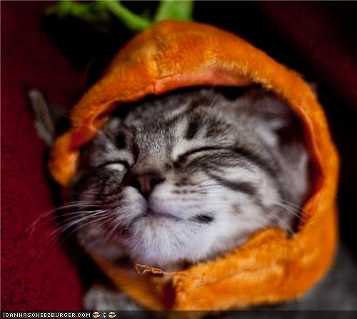 costume cyoot kitteh of teh day halloween meowloween pumpkins sleeping tired - 5337341440