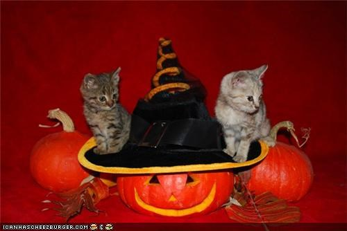 cyoot kitteh of teh day,halloween,hats,jack o lanterns,meowloween,pumpkins,two cats,witch,witch hat