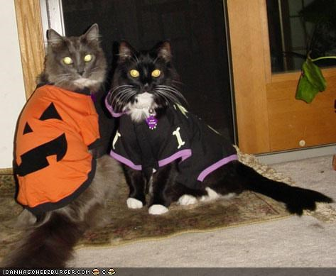 costume,cyoot kitteh of teh day,halloween,meowloween,pumpkins,trick or treat,two cats