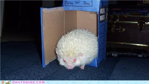 doctor who,hedgehog,model,playing,reader squees,show,statement,tardis