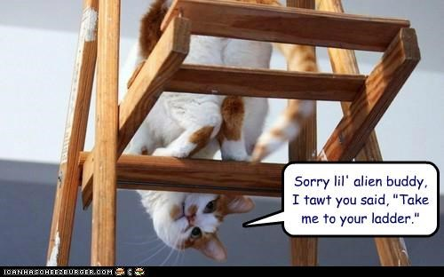 alien apology caption captioned cat confused ladder leader pun quote sorry tabby